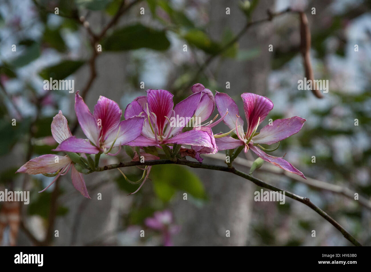 Hawaiian flowers growing on tree limb hawaii usa stock photo hawaiian flowers growing on tree limb hawaii usa izmirmasajfo