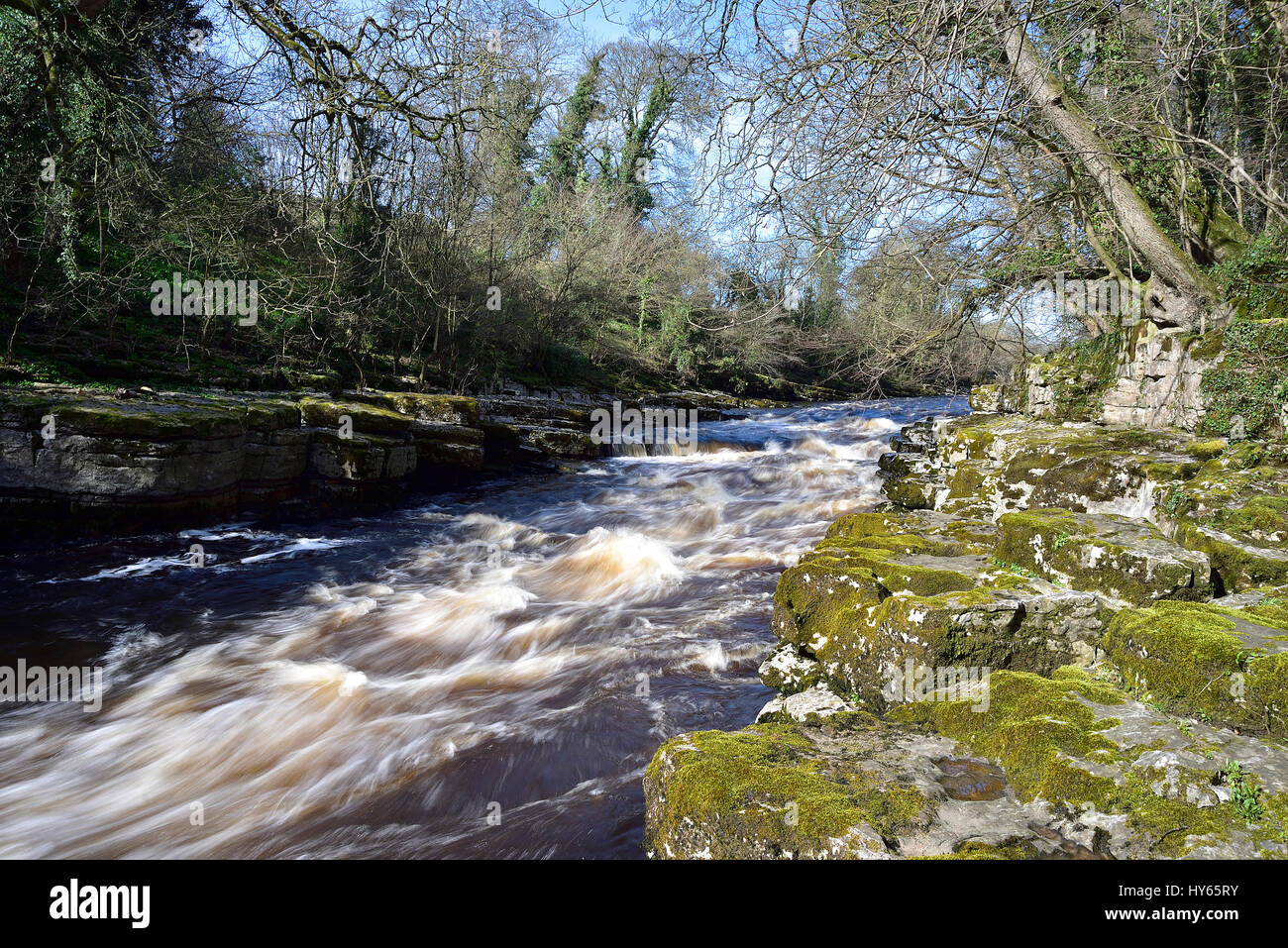 River Tees near Egglestone Bridge showing a secluded section of the river in spate - Stock Image
