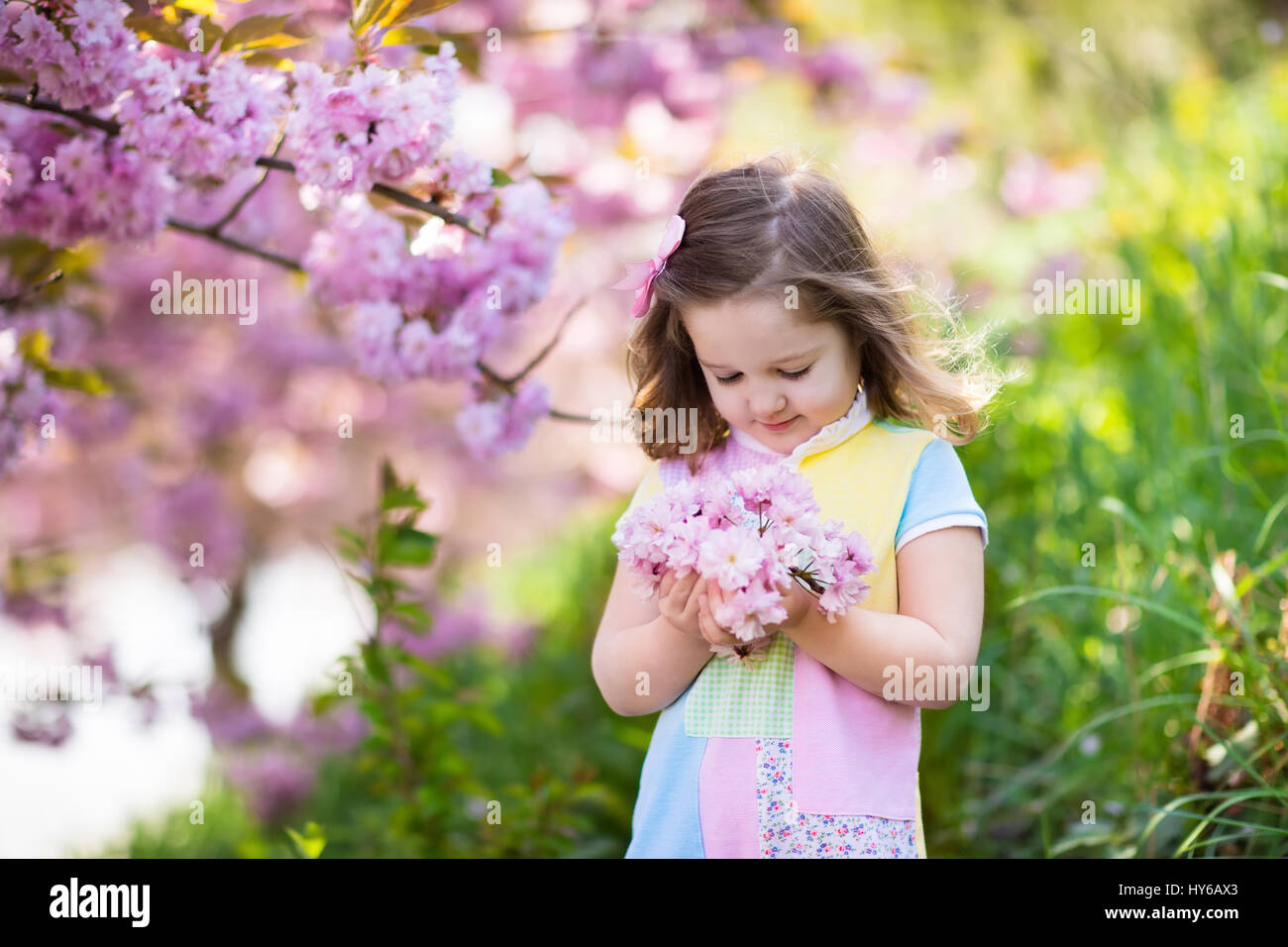 Little happy girl playing under blooming cherry tree with pink stock little happy girl playing under blooming cherry tree with pink flowers child holding sakura blossom summer fun for family with kids outdoors in a be mightylinksfo