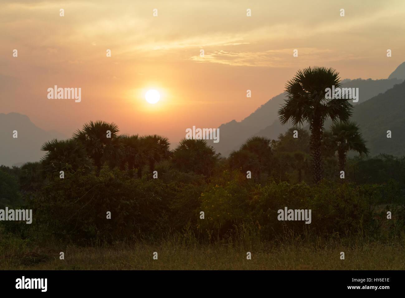 Tropical landscape in Ettimadai, near Coimbatore, Tamil Nadu, South India - Stock Image