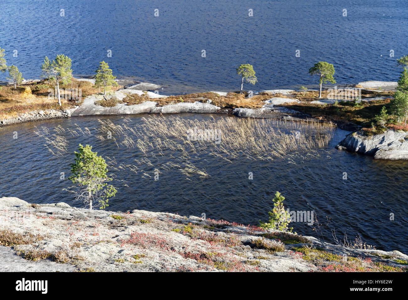 Grass growing in a lake in Heggmoen, Norway - Stock Image