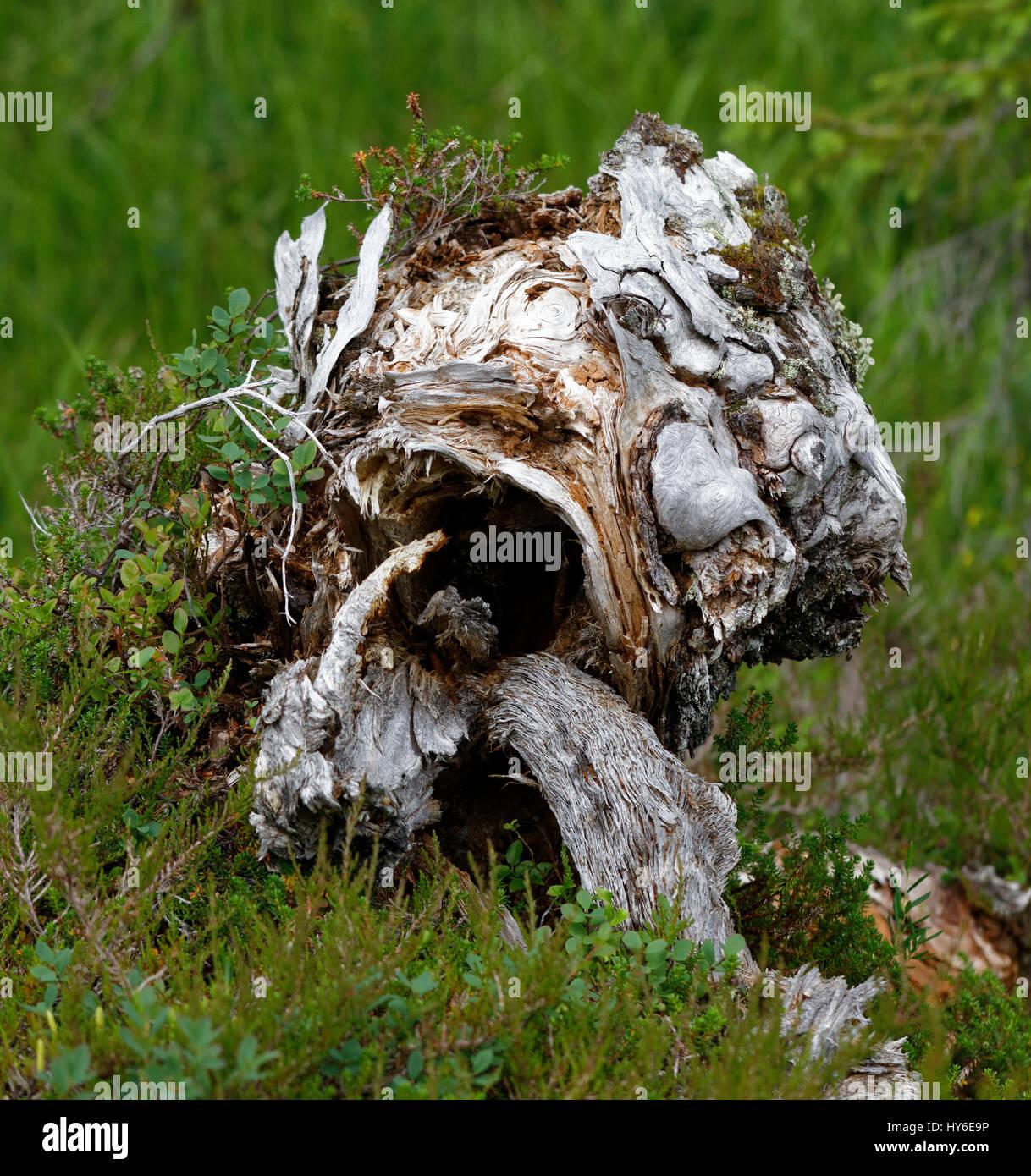Tree stub - Stock Image
