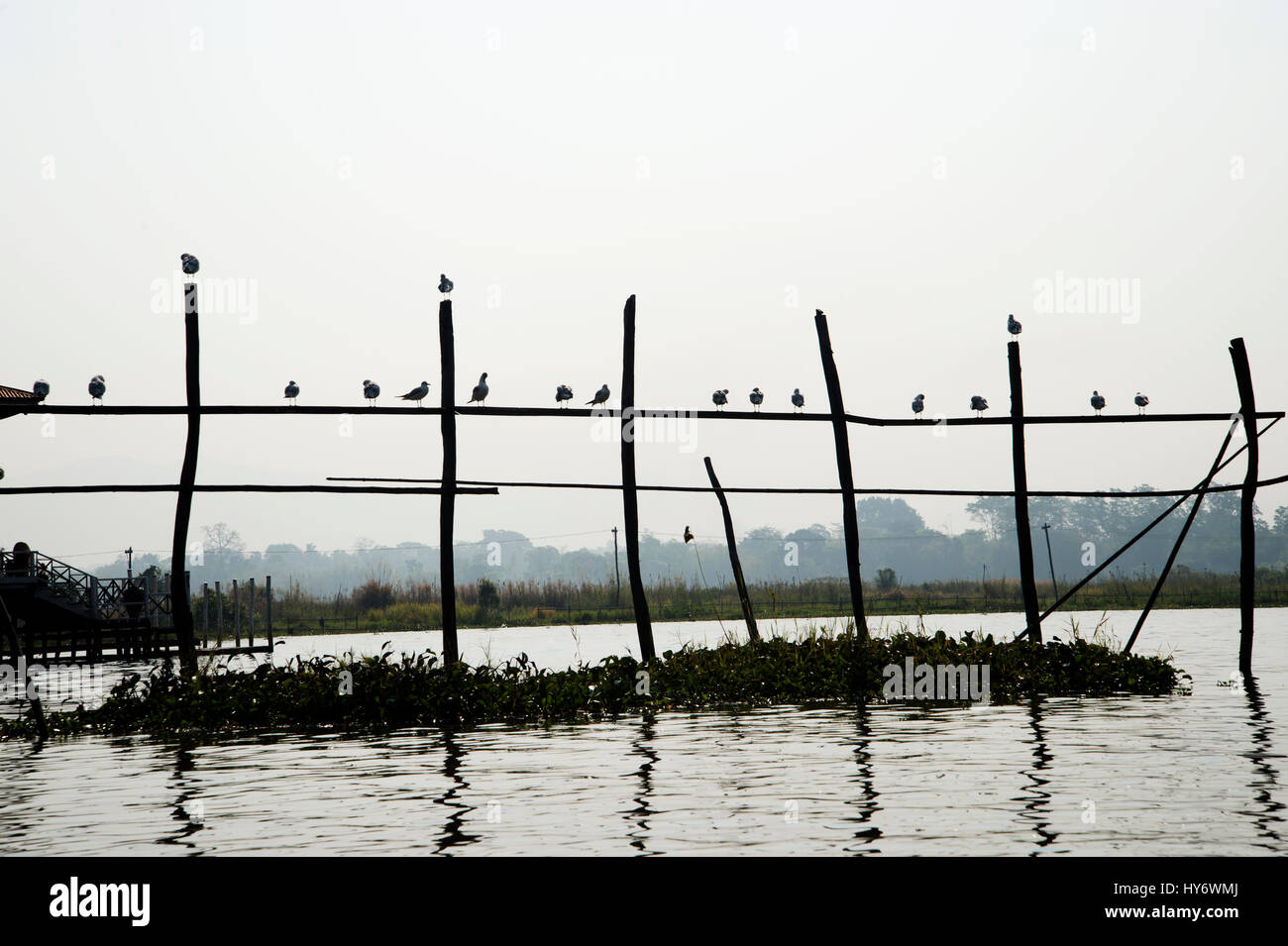 Myanmar (Burma). Inle lake. Birds perched on poles. Stock Photo