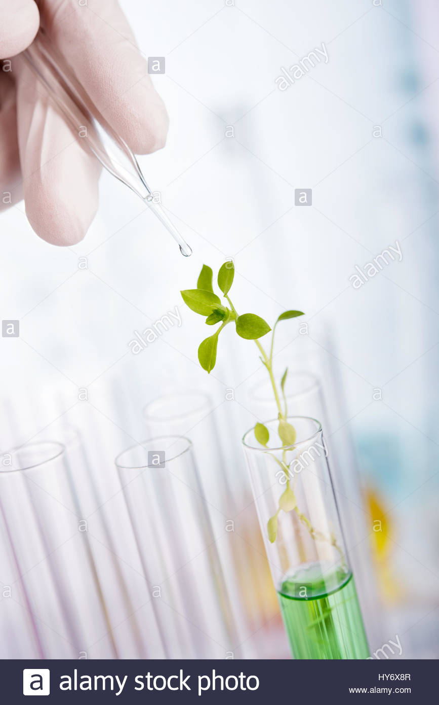 Biotechnology Research. Seedling growing in laboratory undergoing experiment - Stock Image