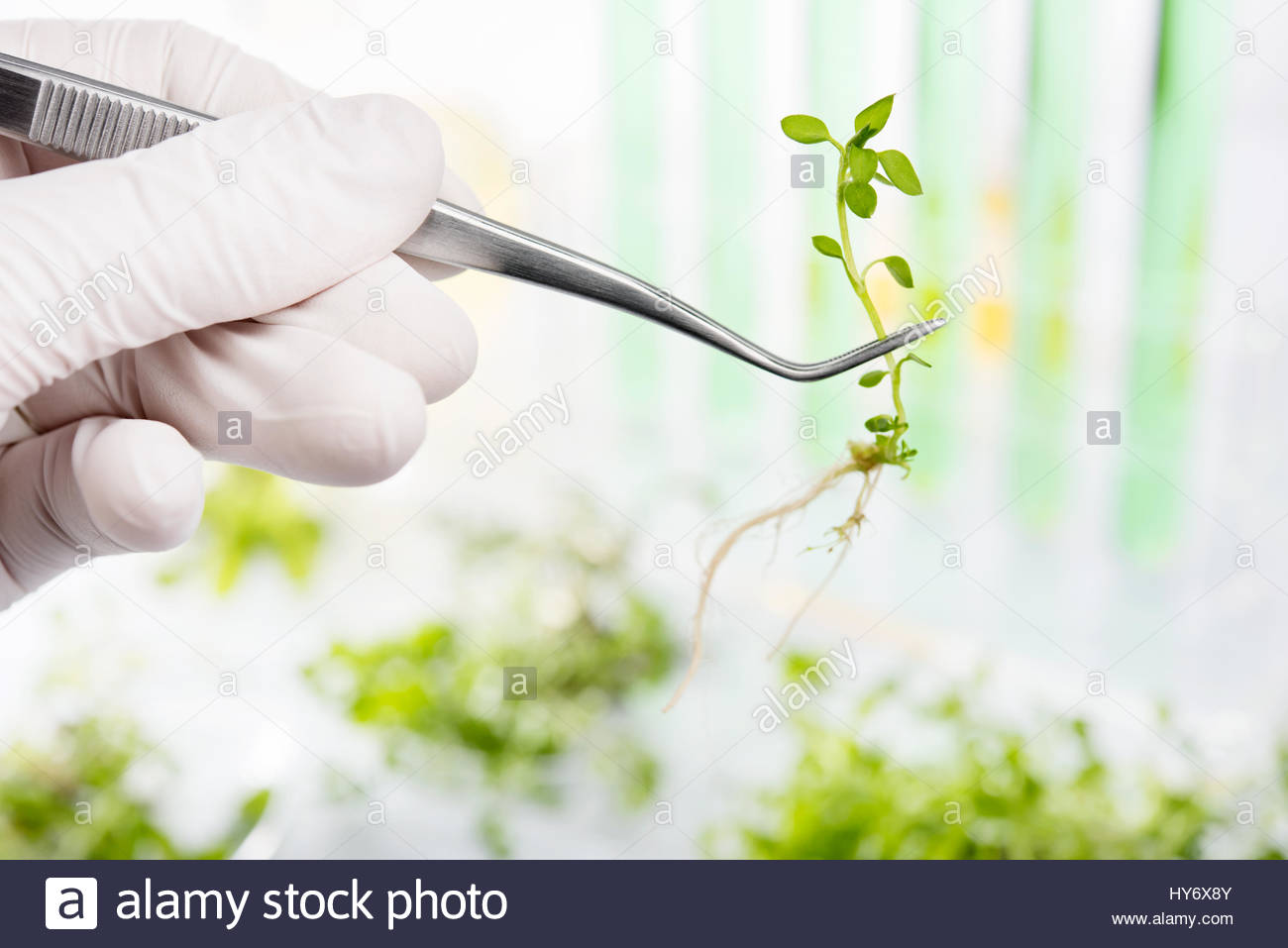 Scientist researching on plants in a laboratory Stock Photo