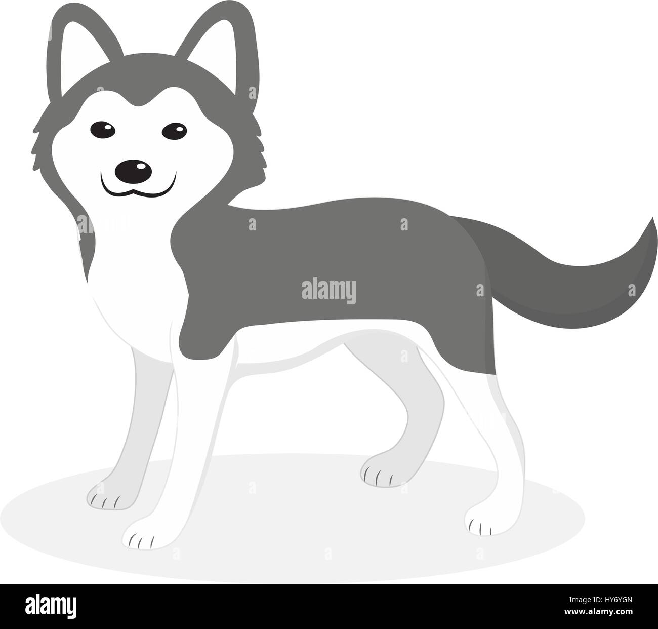 Husky breed dog icon, flat, cartoon style. Cute puppy isolated on white background. Vector illustration, clip-art. - Stock Vector