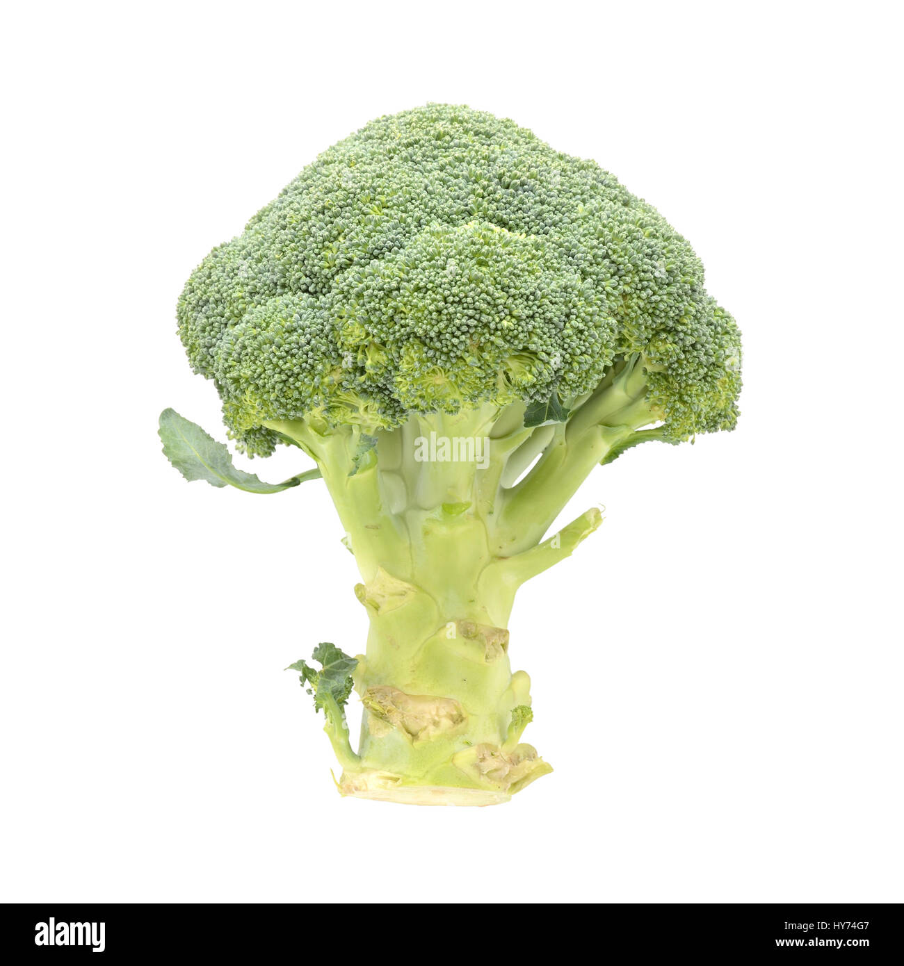 Raw green broccoli isolated on white background Stock Photo