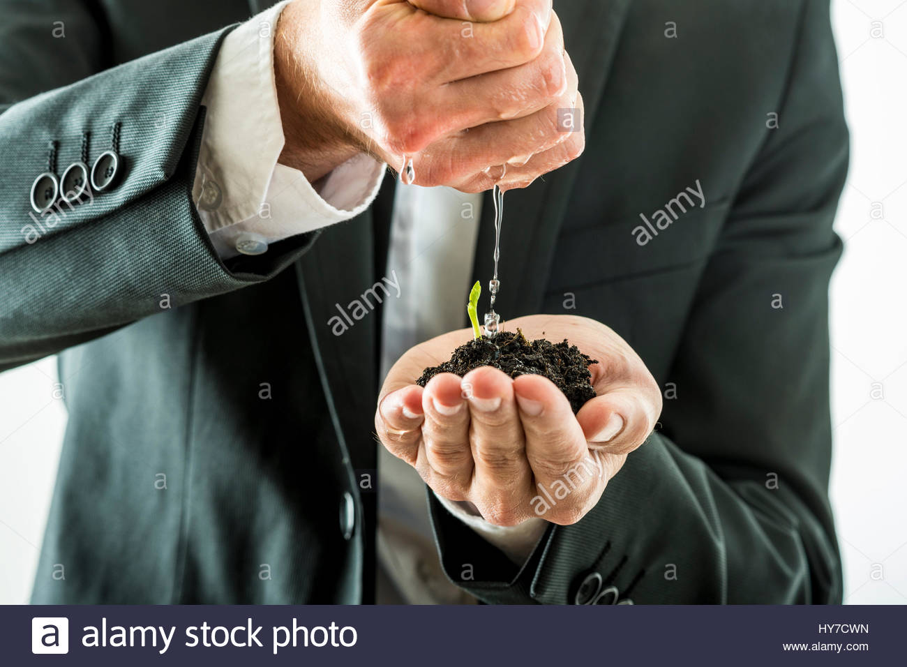 Closeup of businessman watering and nurturing a green sprout growing from a fertile soil he is holding in his cupped - Stock Image