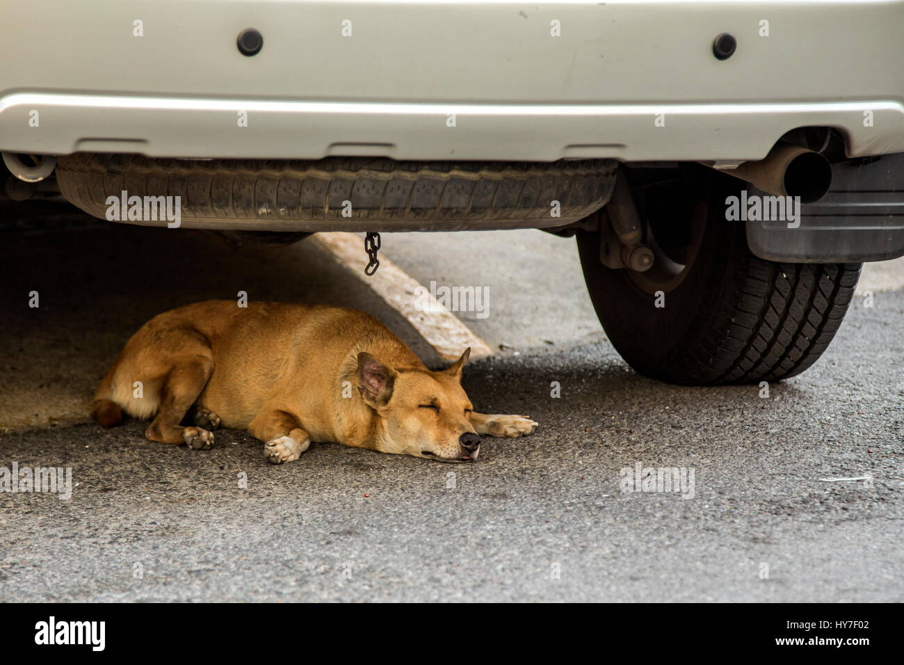 Sleeping dog under the SUV car - Stock Image