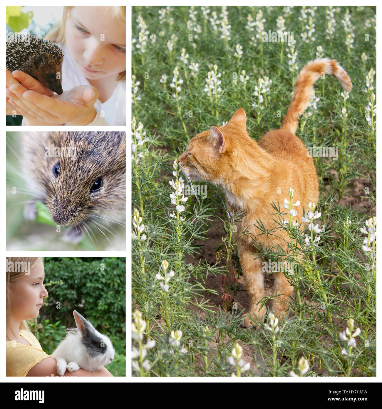 Collage with animals and children in the garden - Stock Image