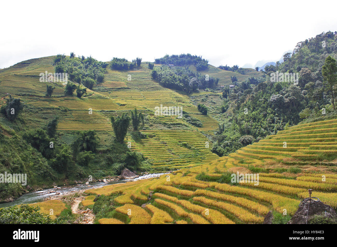 Top view of agriculture terraced rice and hut on the hill ,Sapa ,Veitnam - Stock Image