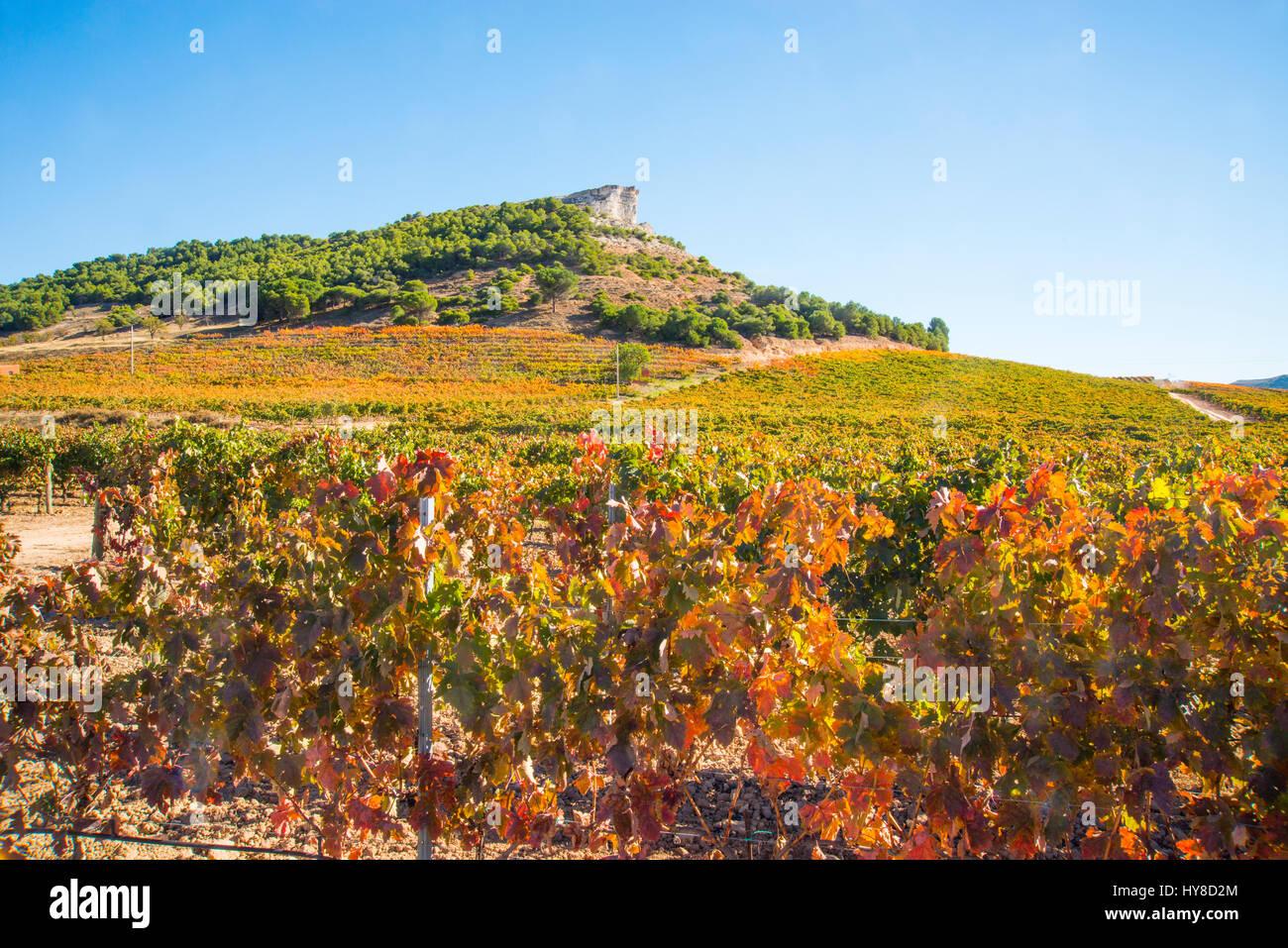Vineyards in Autumn. Ribera del Duero, Valladolid province, Castilla Leon, Spain. - Stock Image