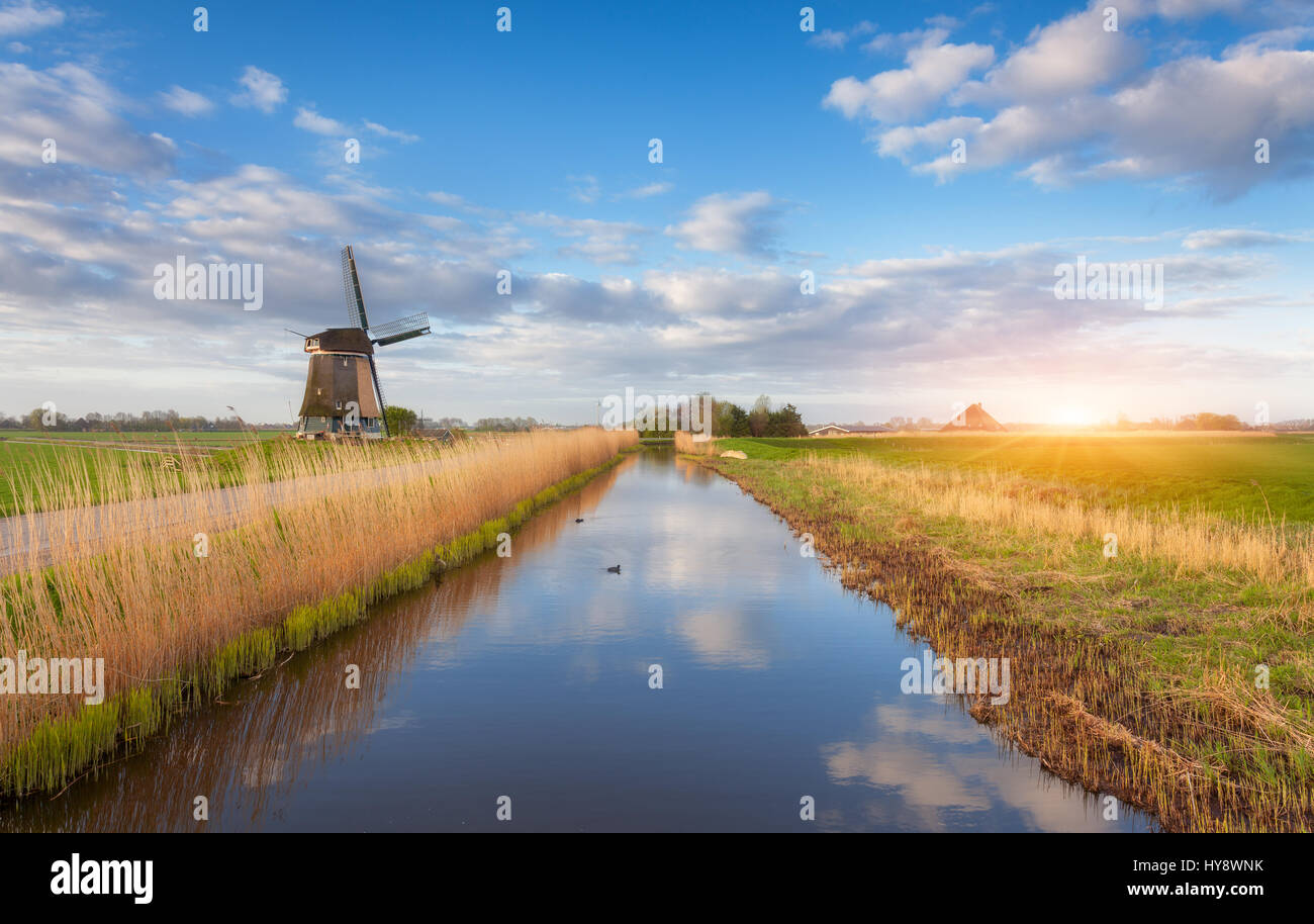 Windmills at sunrise. Rustic landscape with dutch windmills near the water canals, yellow reeds and blue cloudy Stock Photo
