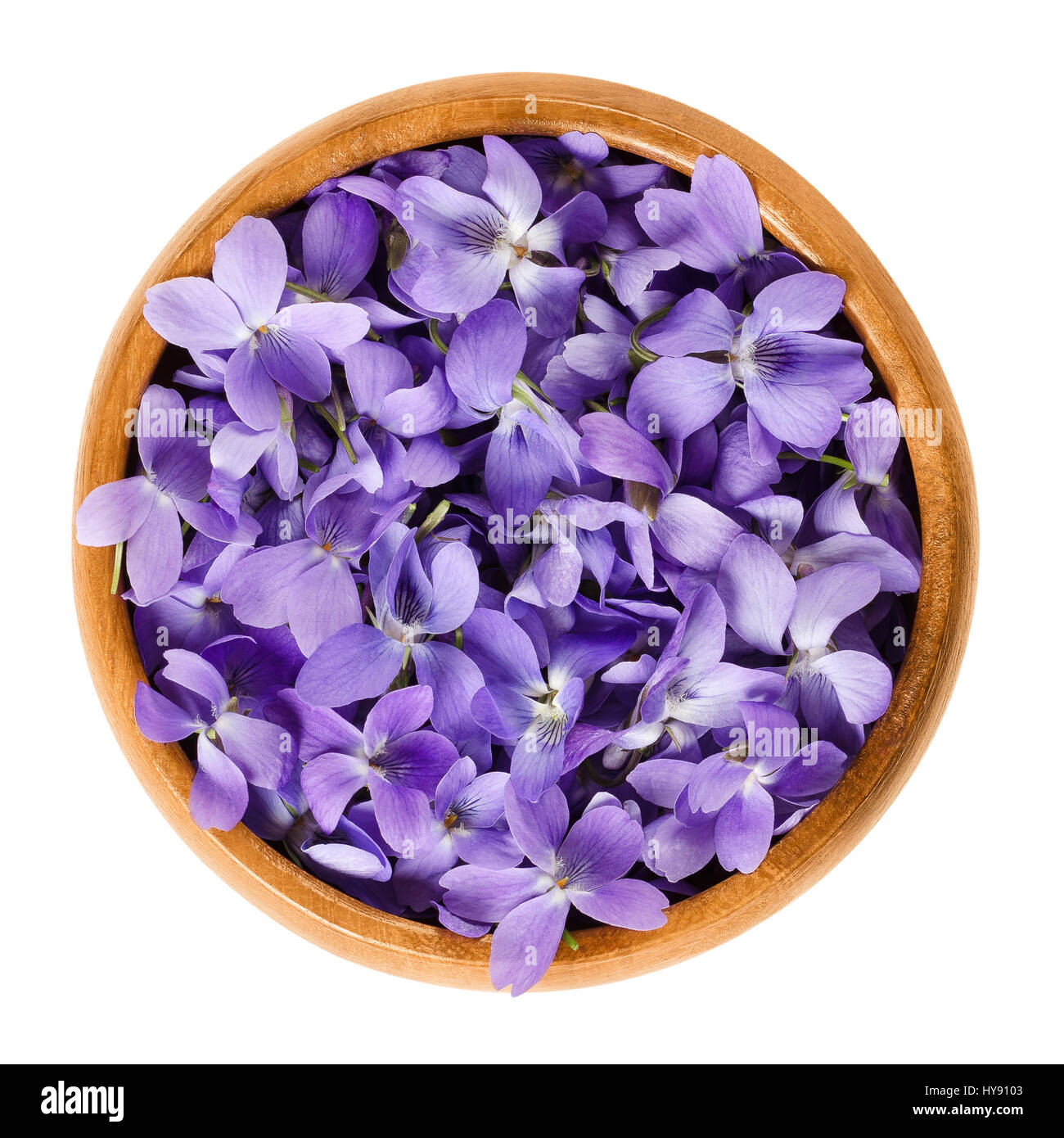Wild violet flowers in wooden bowl. Also wood, sweet, English, common or garden violet. Viola odorata. Edible blossoms, - Stock Image