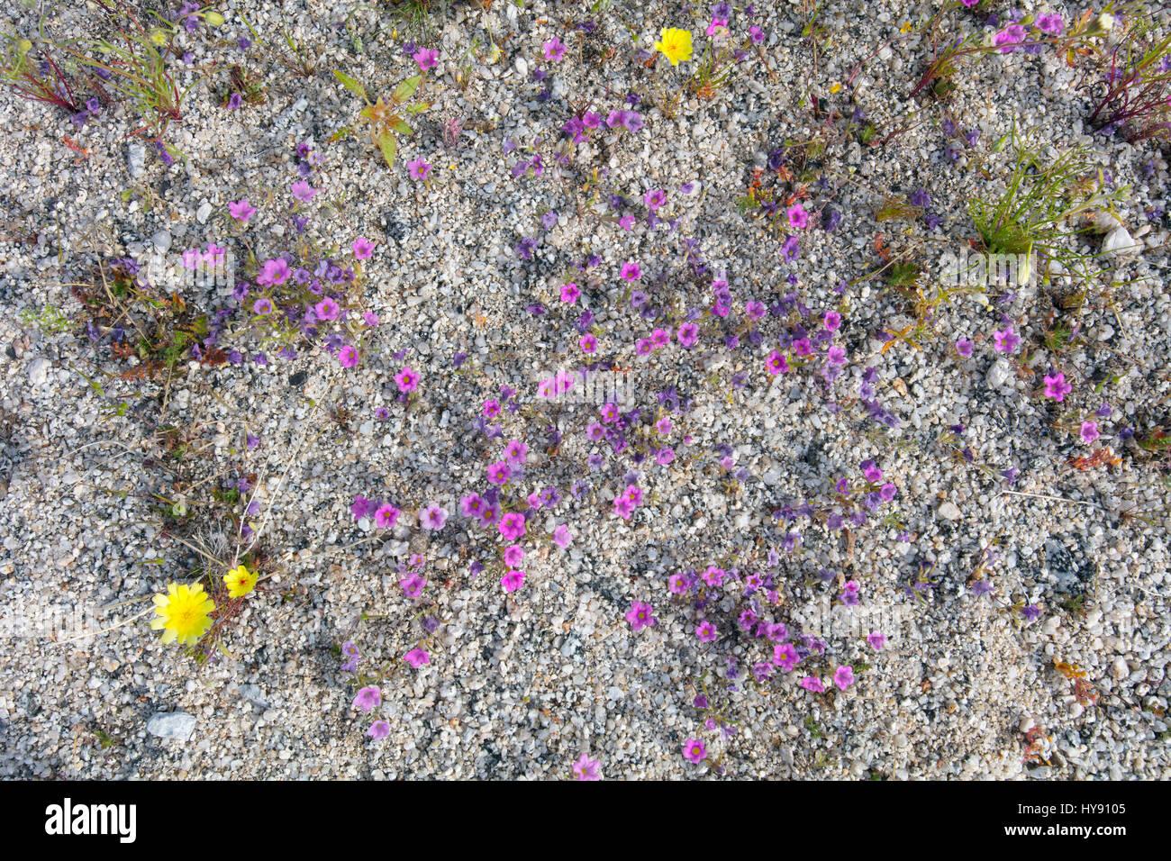Desert Stars - Stock Image
