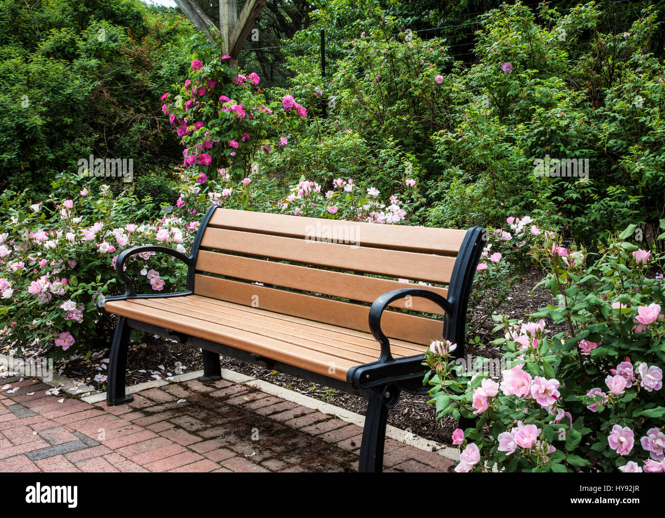 Park bench in a ROse garden, New Jersey, USA Stock Photo: 137267951
