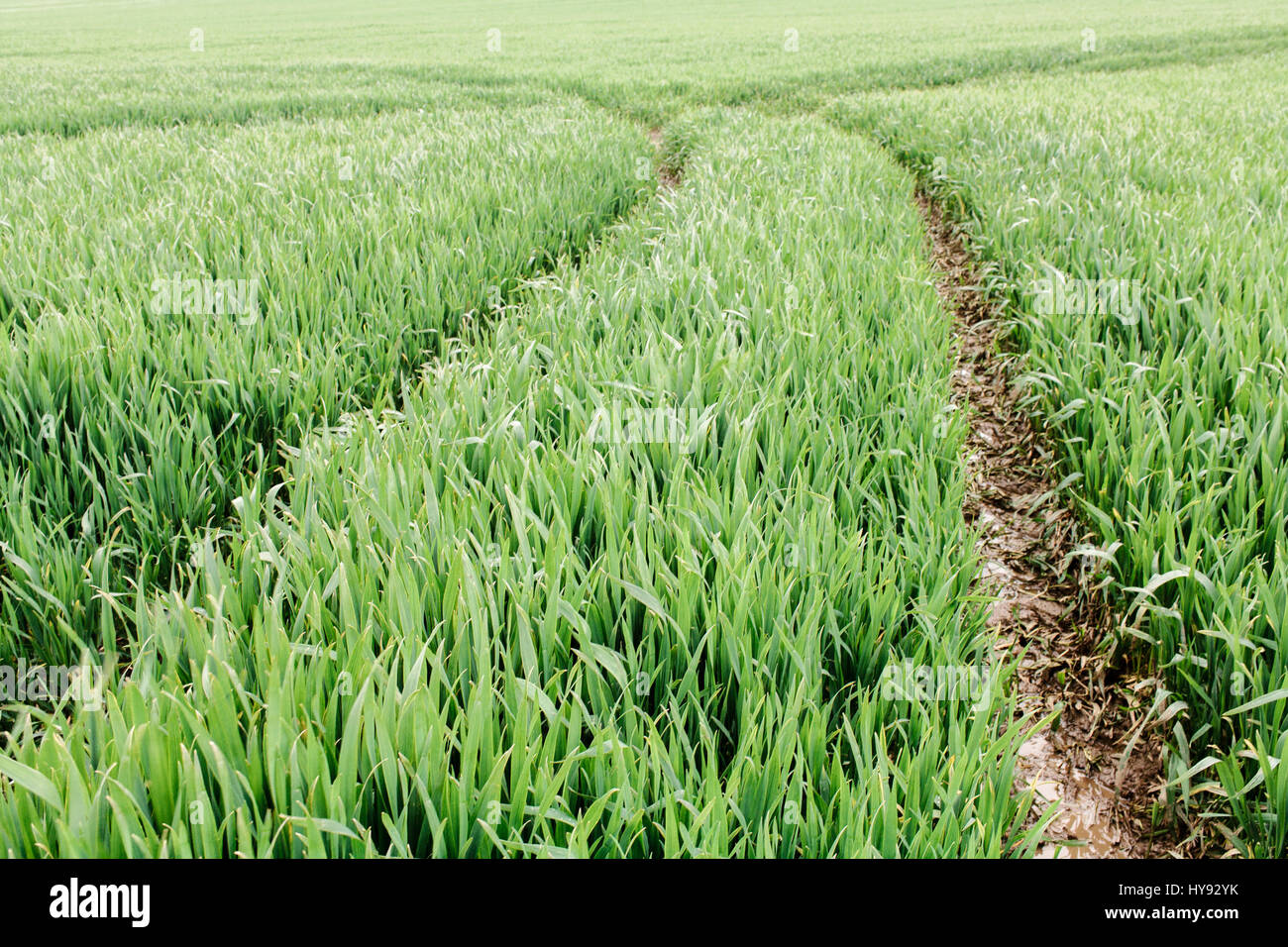 Abstract view of tracks in a field of crops. - Stock Image