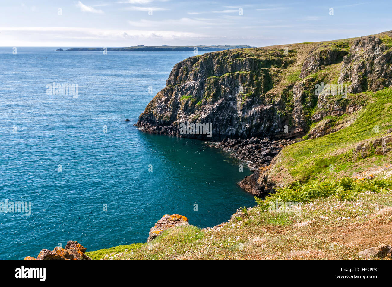 Seabird colony on Lundy off the coast of the UK Stock Photo
