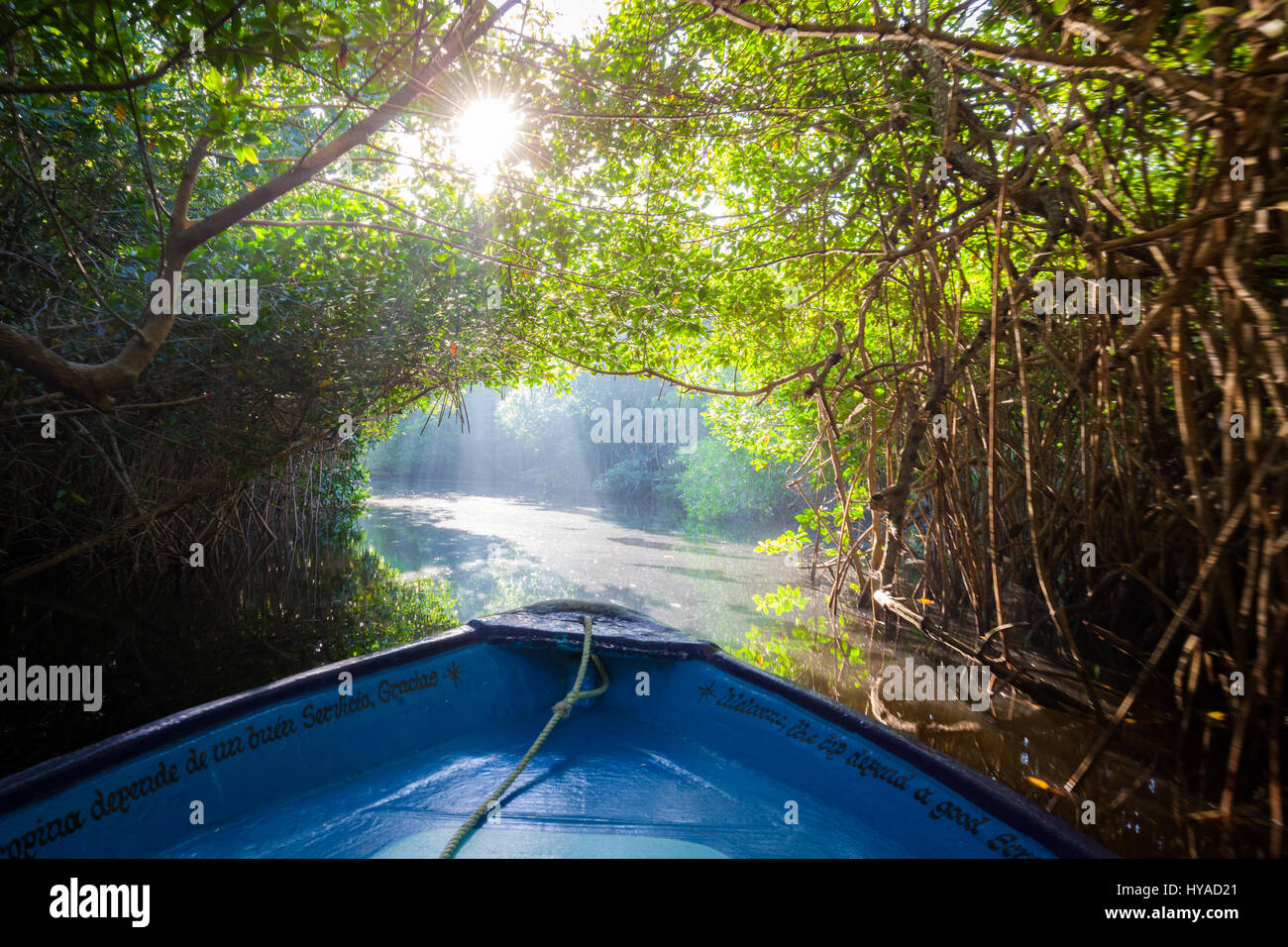 A tunnel of mangroves awaits a boat in the Tovara Natural Reserve in San Blas, Mexico. - Stock Image