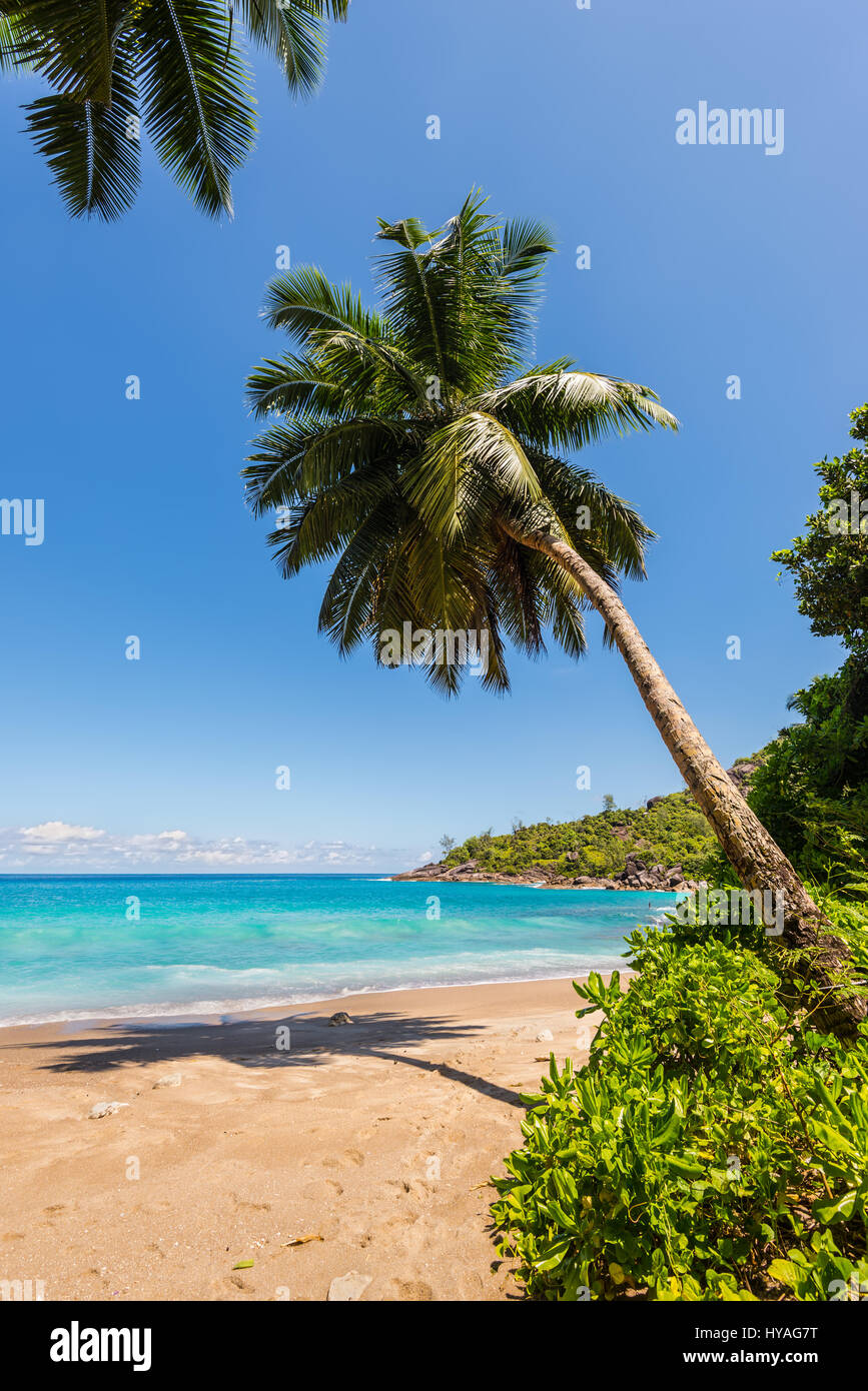 Idyllic paradise palm Anse Mayor beach on the North-West side of Mahe Island near the town of Bel Ombre, Seychelles. - Stock Image