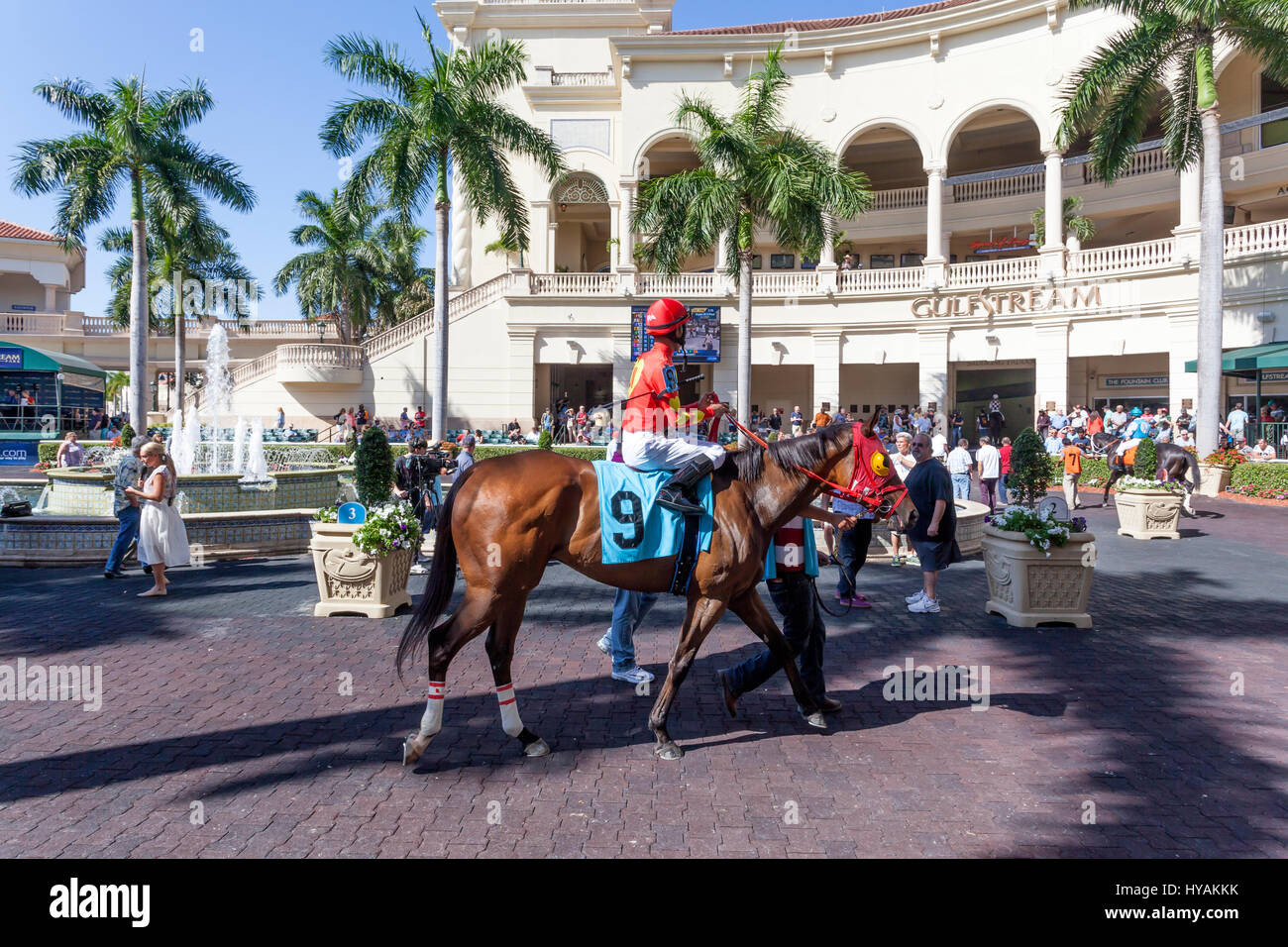 HALLANDALE BEACH, USA - MAR 11, 2017: Racing horses show at the Gulfstream Park race track in Hallandale Beach, - Stock Image