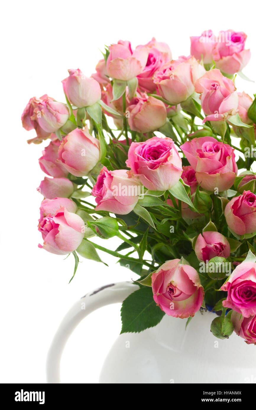 Bouquet of small pink wild roses close up isolated on white Stock ...