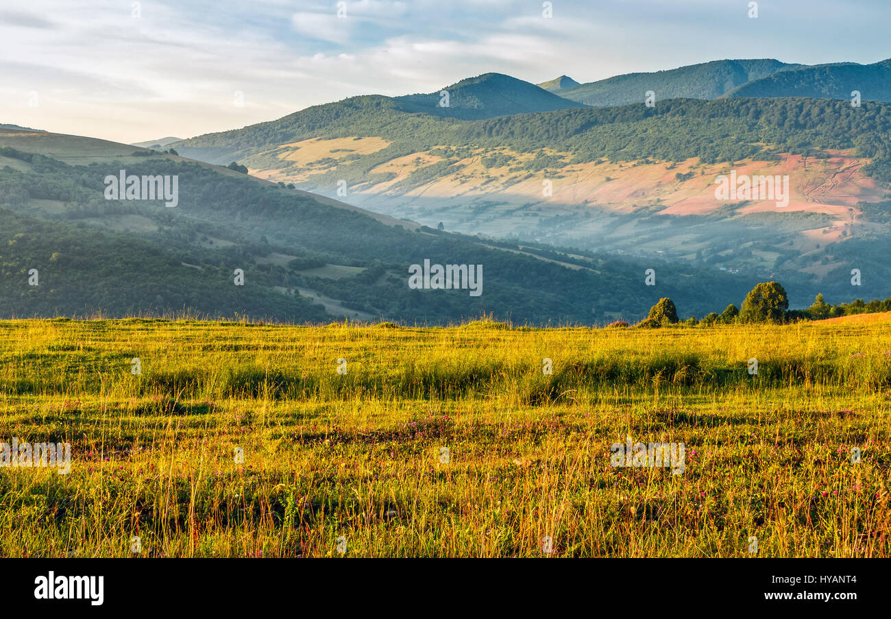 agricultural hay field in mountains. trees behind the grassy meadow. beautiful rural landscape - Stock Image