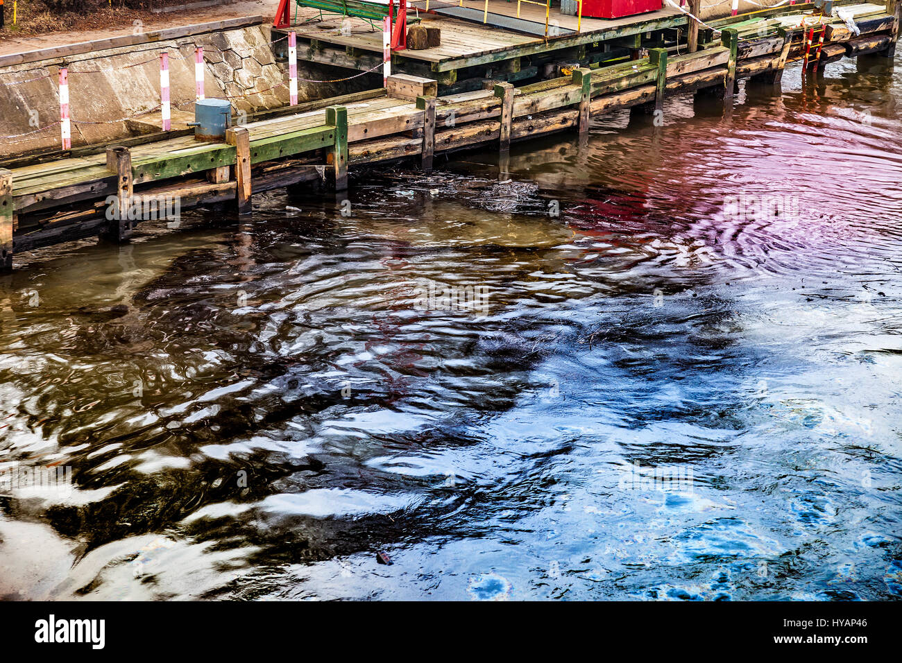 Crude oil spill on the water - environment pollution Stock ...