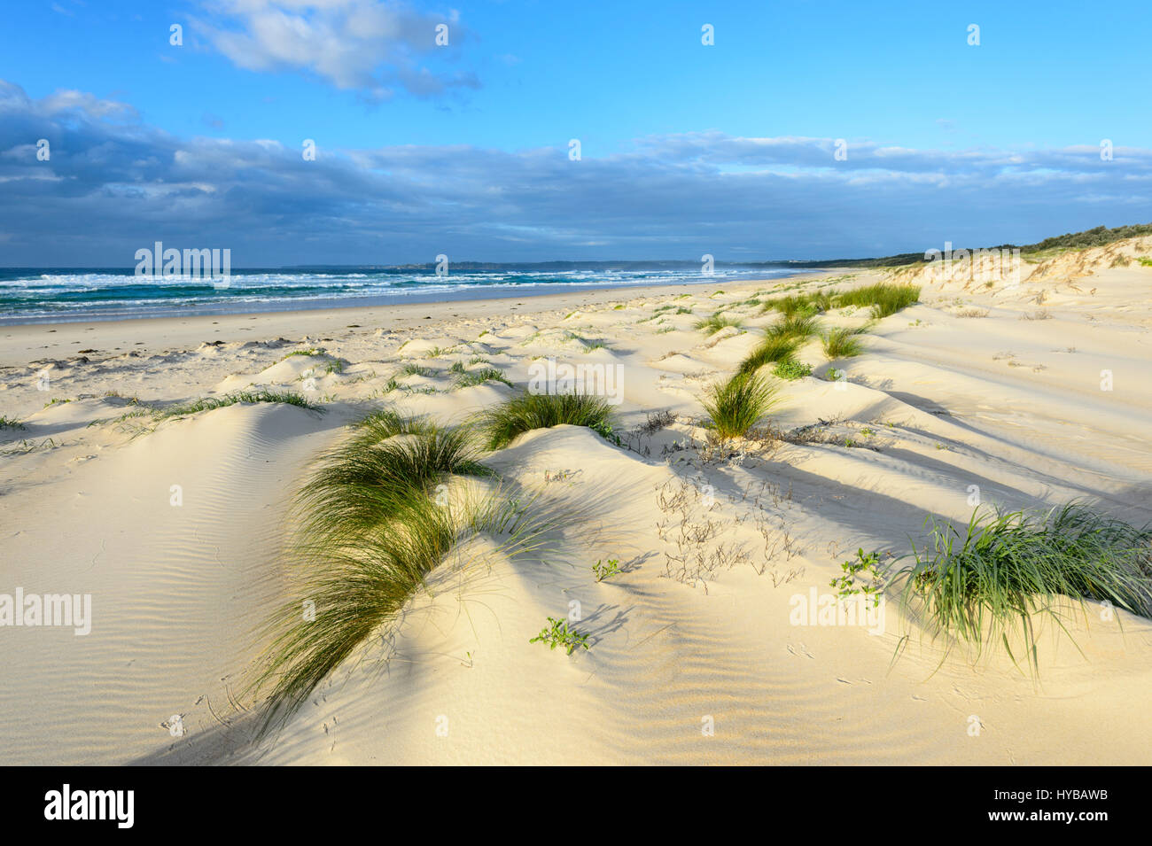 Picturesque sand dunes and grass tufts at Conjola Beach, Shoalhaven, South Coast, New South Wales, NSW, Australia - Stock Image