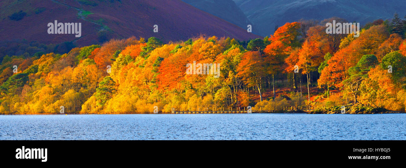 A blaze of autumn colour along the shores of Derwentwater, Lake District National Park, England, UK - Stock Image