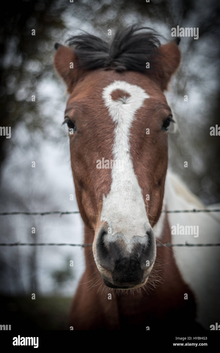 Photogenic Horse - Stock Image