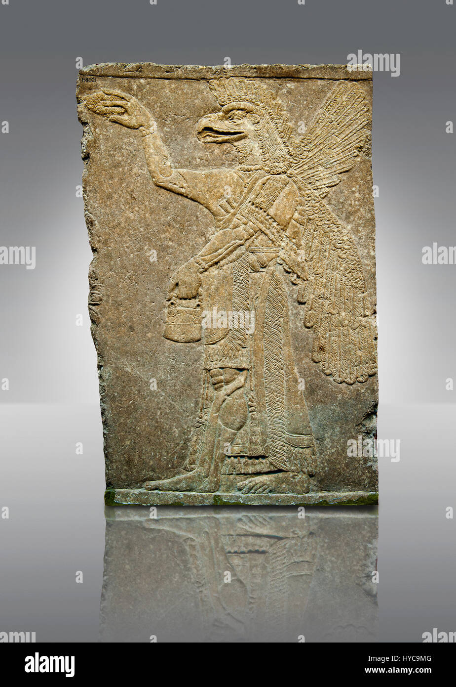 Assyrian relief sculpture panel of a protective spirit with an eagles Head from Nimrud, Iraq.  The spirit is holding - Stock Image