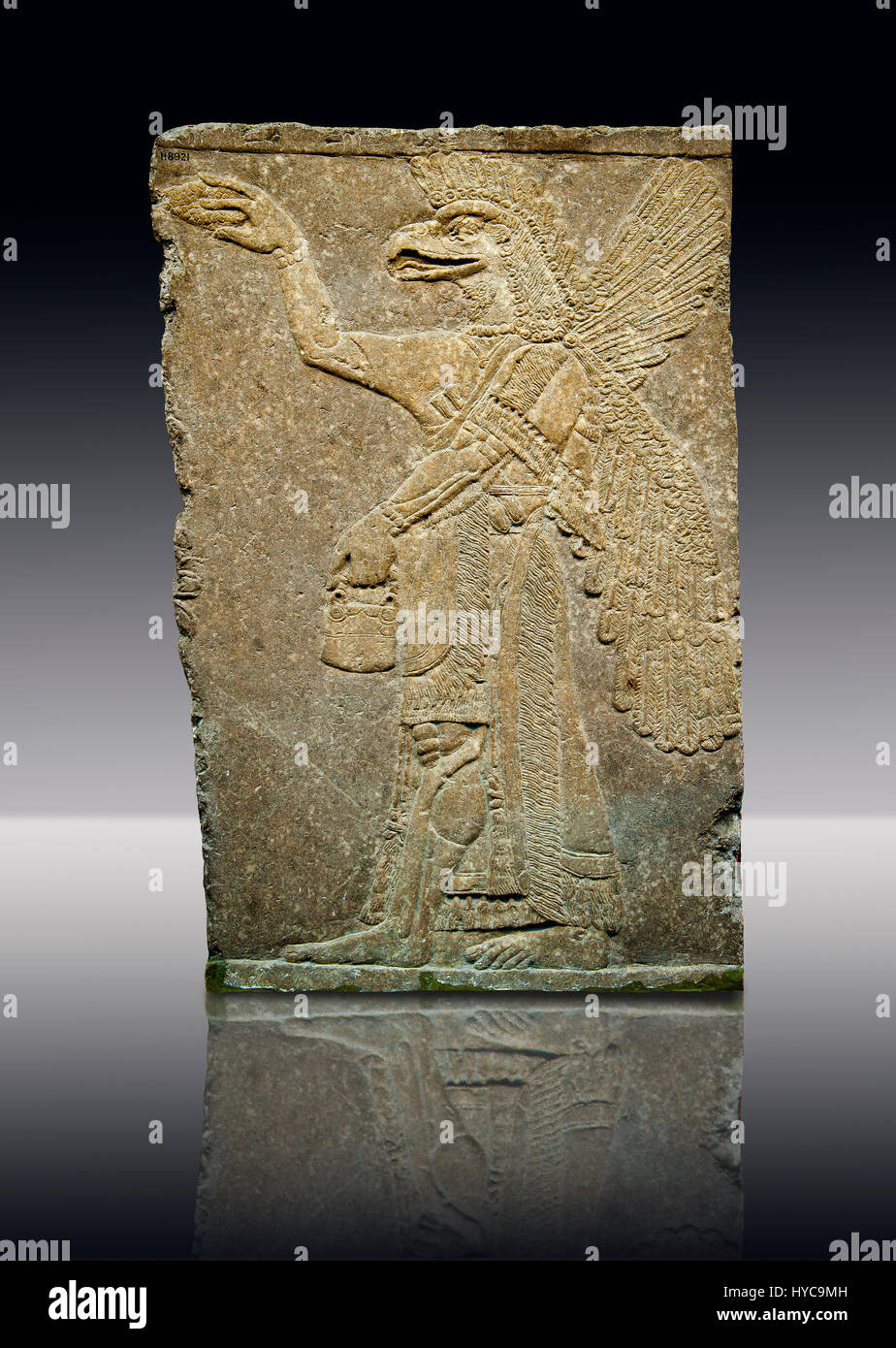 Assyrian relief sculpture panel of a protective spirit with an eagles Head from Nimrud, Iraq.  The spirit is holding Stock Photo