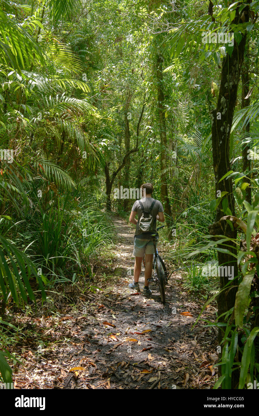 Bicycling in the jungle, Ko Tarutao Island, Thailand - Stock Image