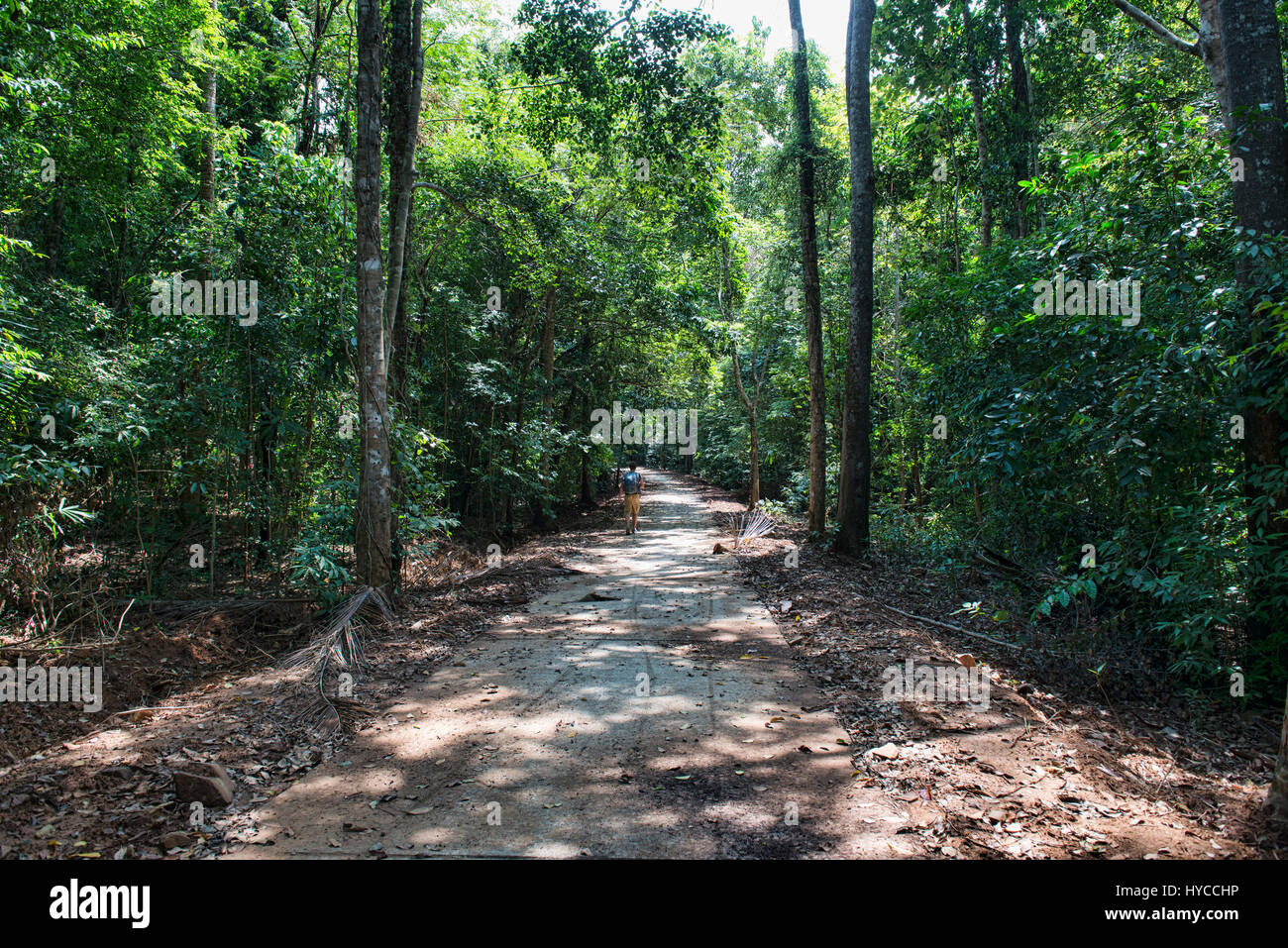 Walking in the jungle, Ko Tarutao Island, Thailand - Stock Image