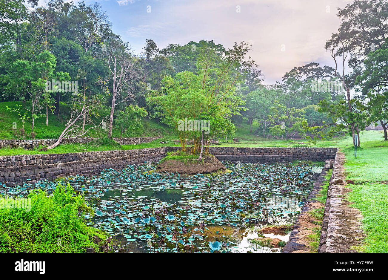 The old moat in Sigiriya, covered with lotus flowers, includes the small islet with greenery, Sri Lanka. Stock Photo