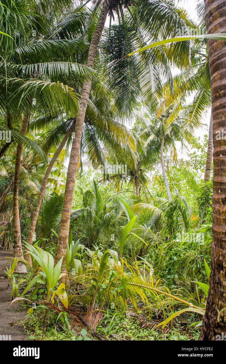 Palm Leaves Tropical Forest On The Island In Indian Ocean Beautiful Stock Photo Alamy Tropical paradises are amazing to visit and even better to live near they boast a mixture of green and pinkish red leaves that are sure to add a pop of color and class to your customer's landscape. https www alamy com stock photo palm leavestropical forest on the island in indian oceanbeautiful 137343866 html