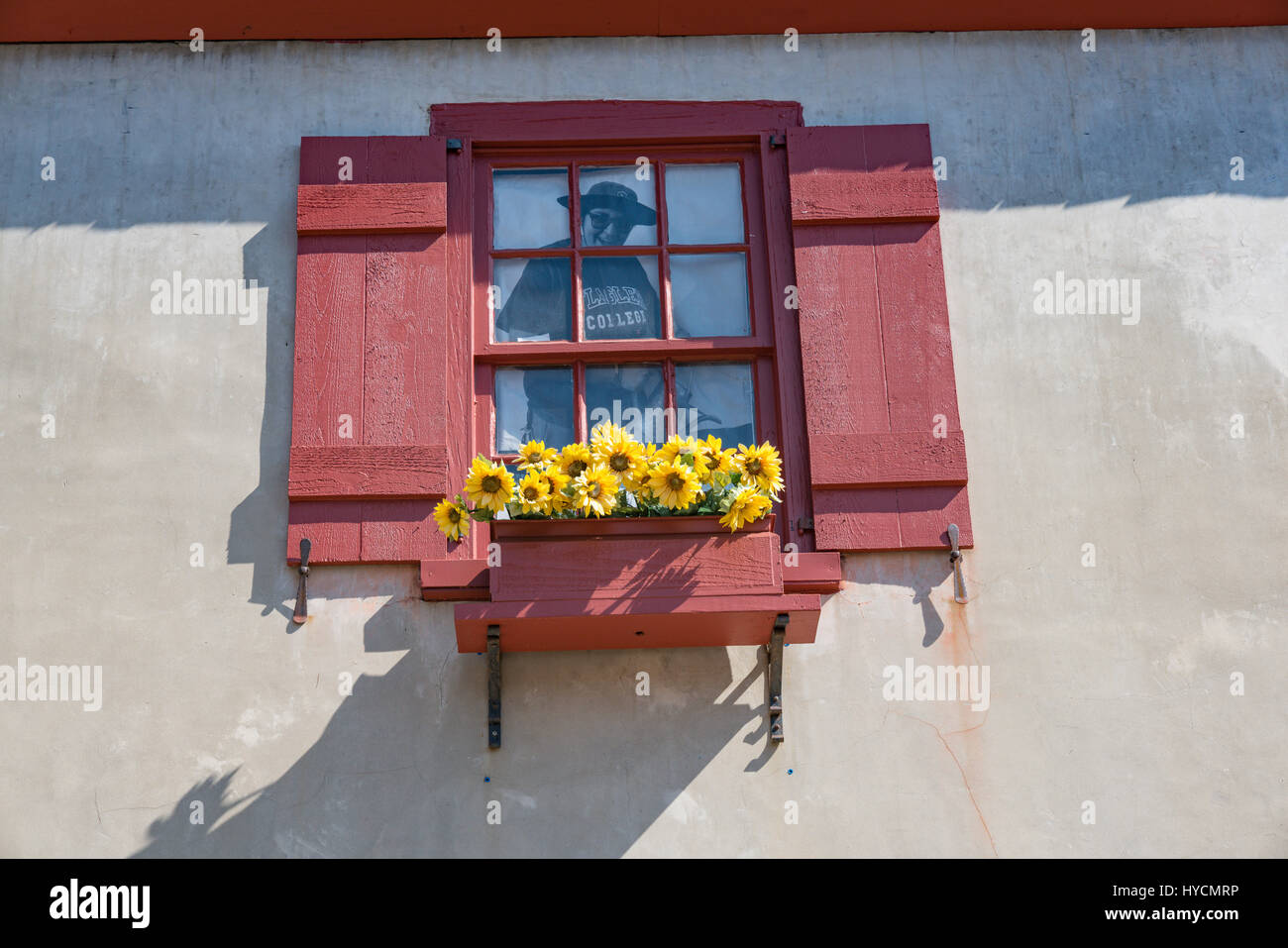 Sunflowers brighten a window box on St George Street in St Augustine, Florida - Stock Image