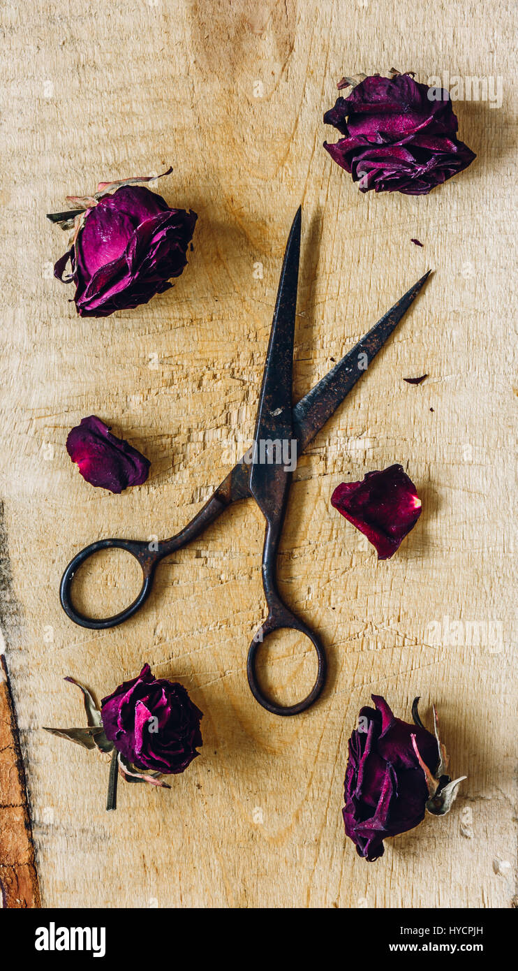 Old Scissors with Dry Roses Buds. View from Above. Stock Photo