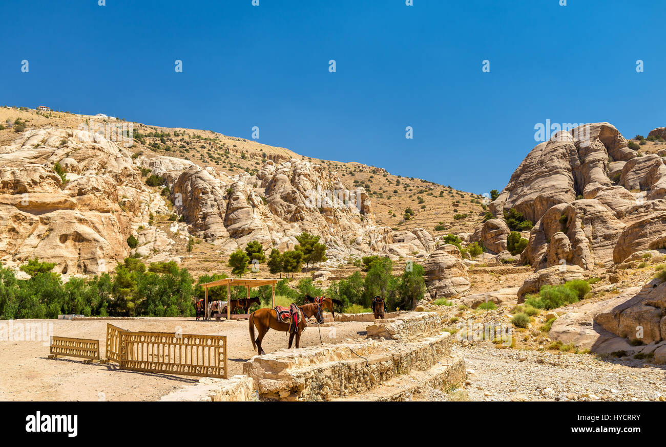 Bedouin hourses rest in the ancient city of Petra - Stock Image