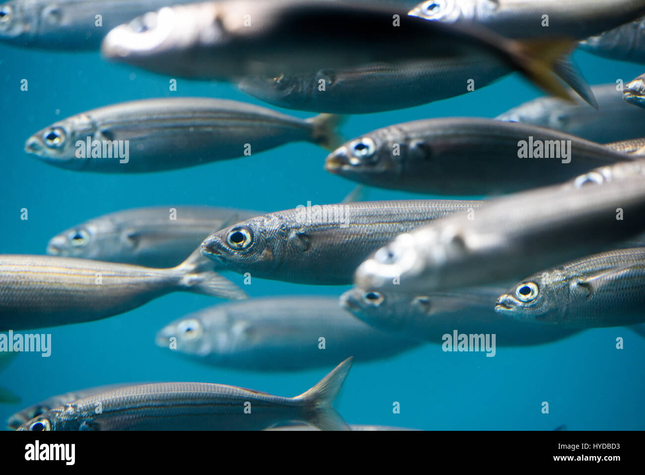 Underwater fish photography Stock Photo