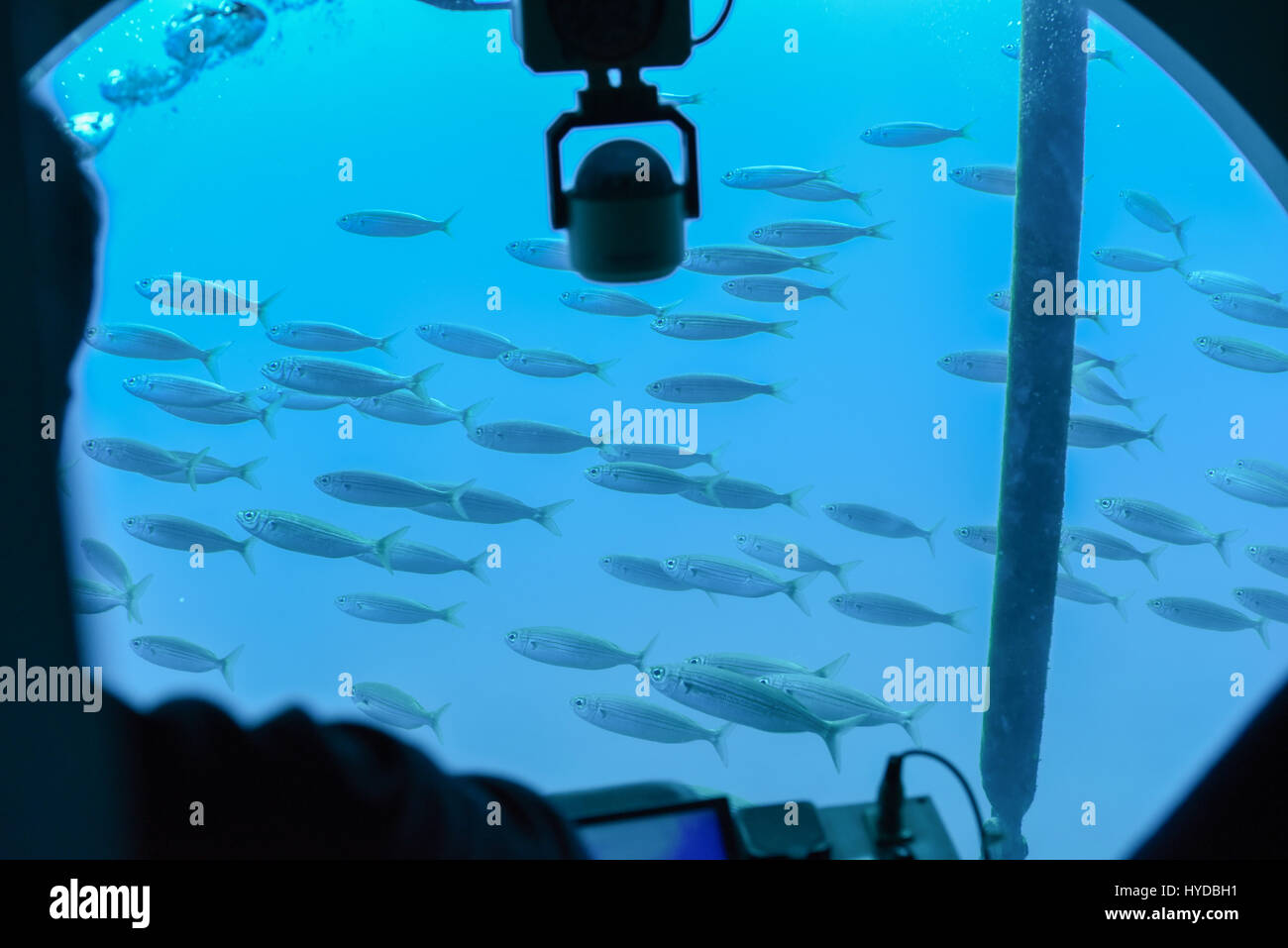 Group of fishes diving under water Stock Photo