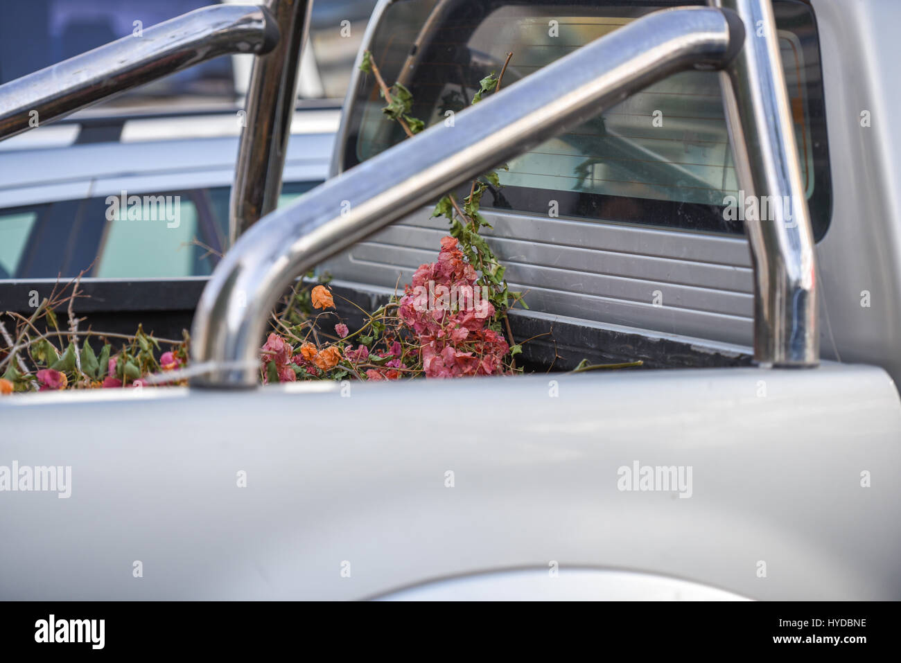 Trunk of a jeep with flowers in it - Stock Image