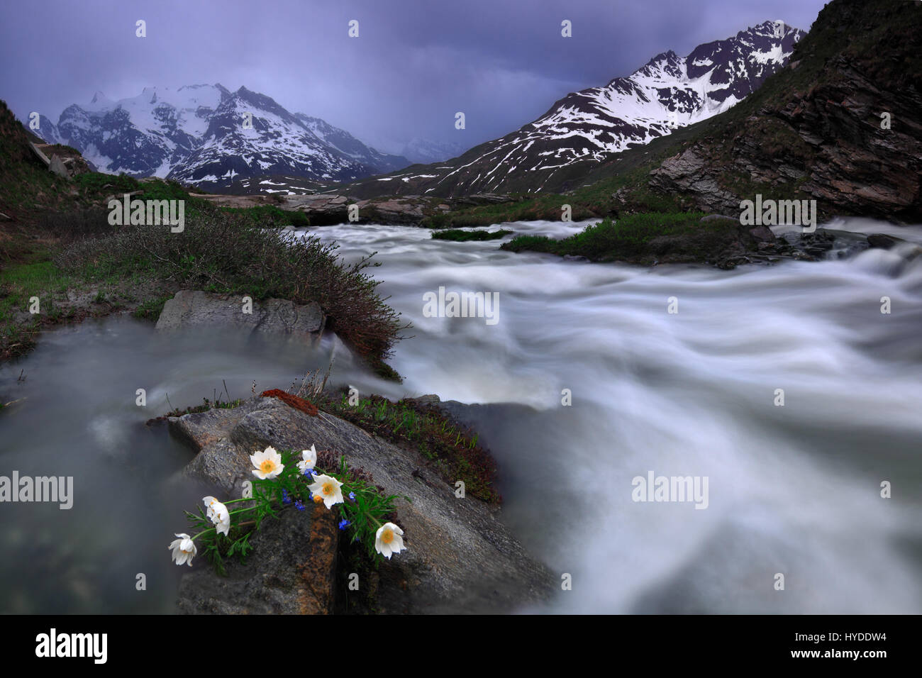 The roaring rapids of the river Arc in the upper part of the Val Cenis in the french Western Alps, Haute Maurienne. - Stock Image