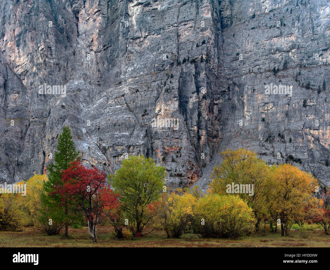 These vertical walls of limestone are huge, they're about 250 meters (800 ft) tall and 1 kilometer wide, and - Stock Image