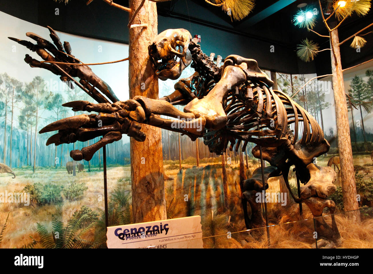 North Carolina museum of natural science Raleigh - Stock Image