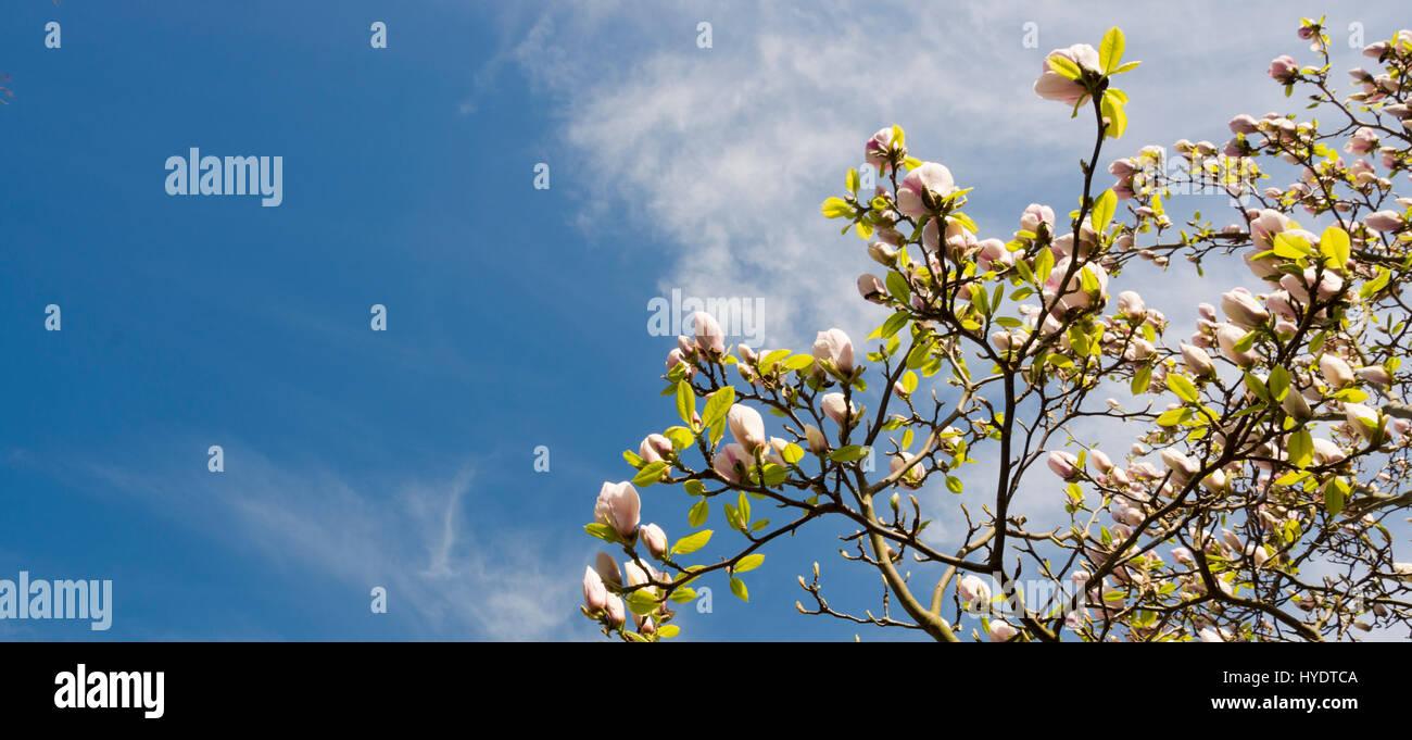 Blossom Bath Stock Photos & Blossom Bath Stock Images - Alamy