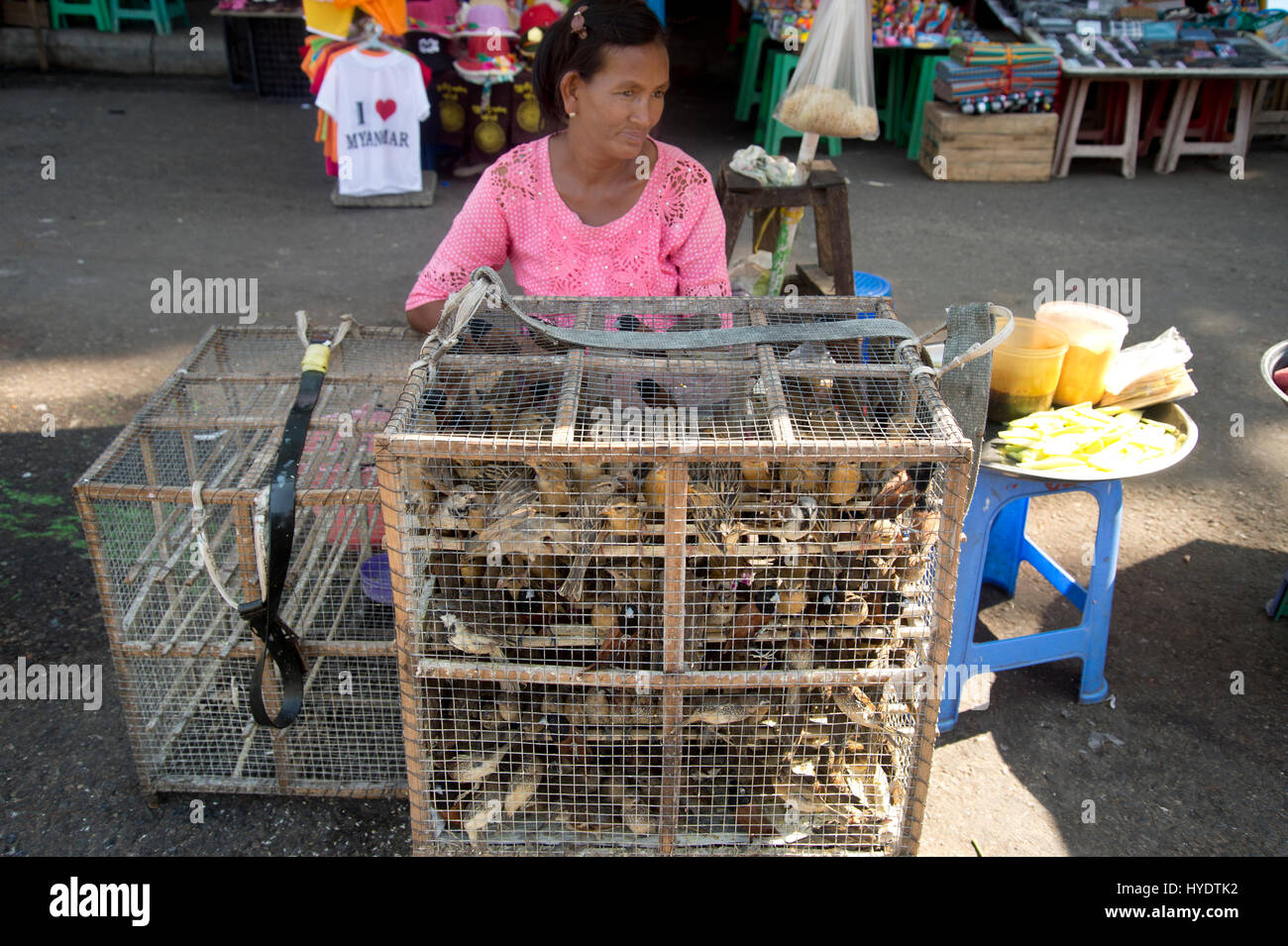 Myanmar . Yangon. Shwedagon pagoda  -a woman selling  small birds tightly packed in a cage on sale (it's considered - Stock Image