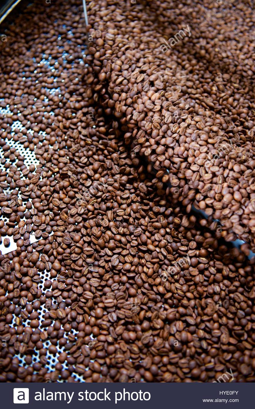 Coffee beans spin in a roasting machine at an independent coffee company, in the SOMA district. - Stock Image