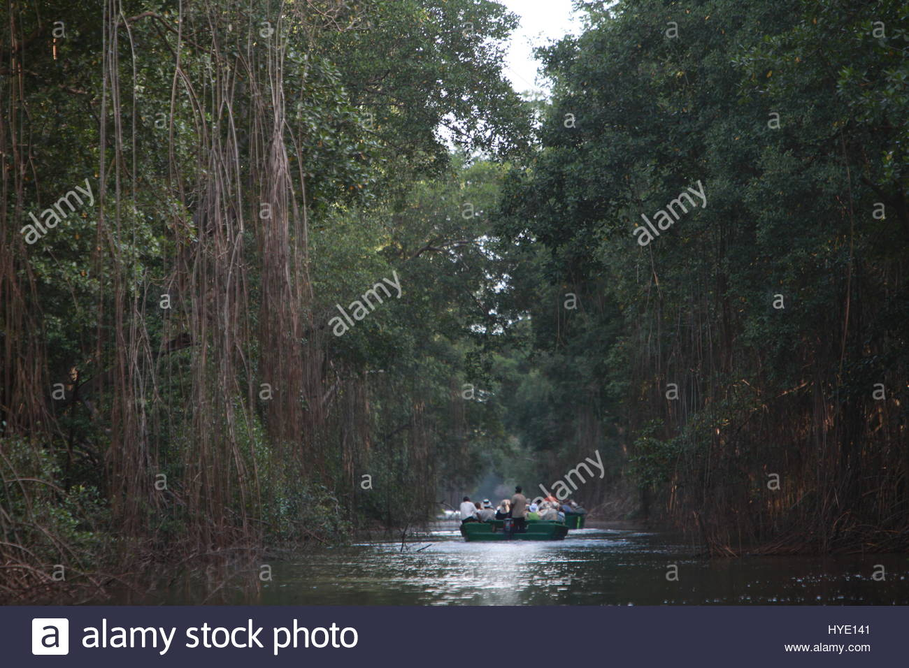 The Caroni Swamp, a designated wildlife sanctuary located at the mouth of the Caroni River. - Stock Image